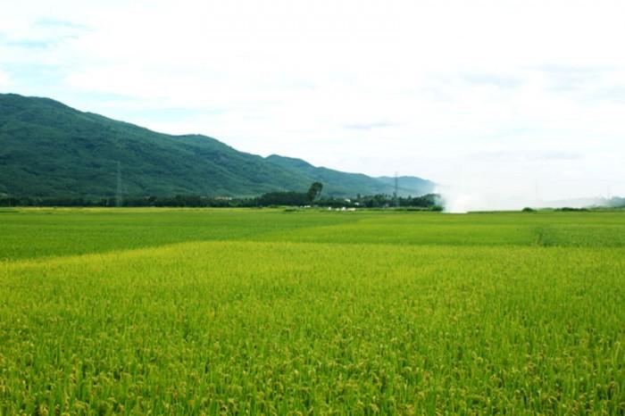 Tư vấn chuyển đổi quyền sử dụng đất nông nghiệp của hộ gia đình, cá nhân
